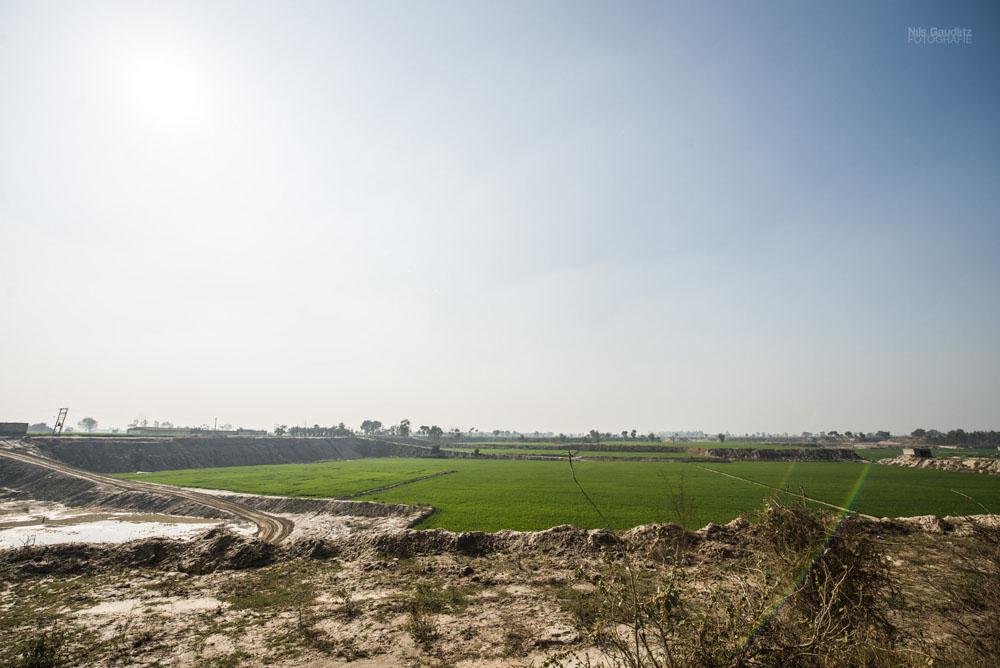 India Landscape